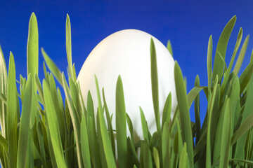 Von . Egg   grass  at  Blue  background. №8153
