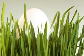 White  Egg   grass. №8185