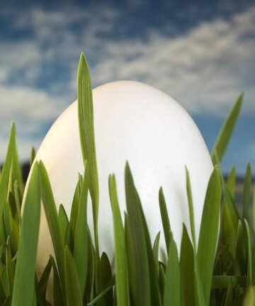 White  Egg   grass  at  background  sky №8142