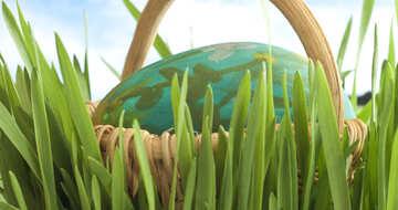 Easter  Egg   grass №8176