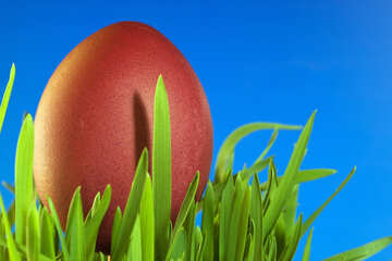 Easter  Egg  and  grass  at  Blue  background .  №8135