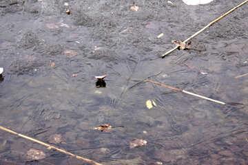 Leaves  rozen-in   ice №8687