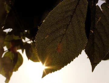 Sun  at  edge  sheet. №8035