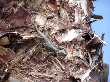 Palm  lizard №8767