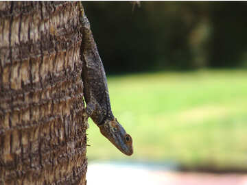 Sly  lizard №8768