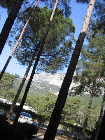 Pine   mountains. №8452