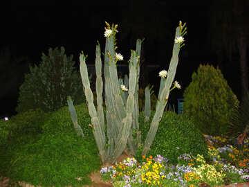 Cactus №8854