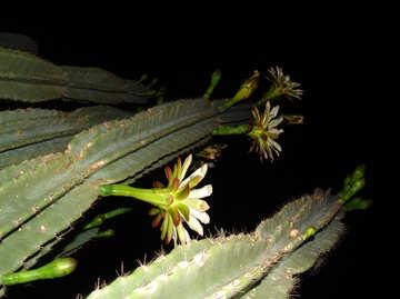 High  cactus  bloom. №8851