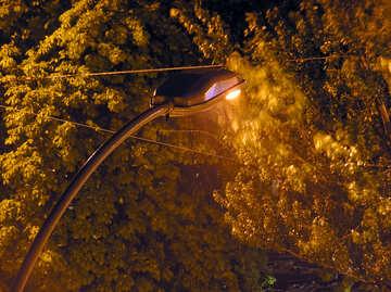 Nightclubs  Trees   lantern. №8067