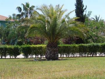 Palma  at  lawn №8891