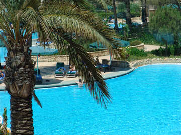 South,  palm ,  Pool. №8342