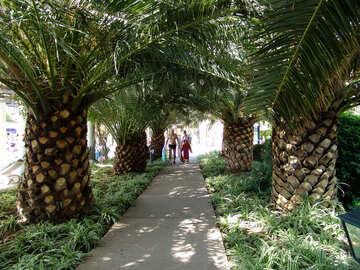 Road palms №8477
