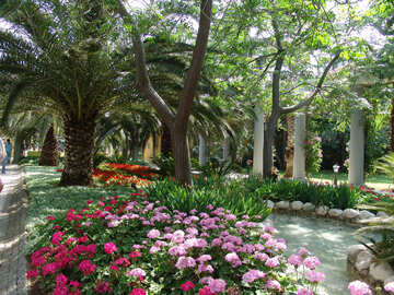 Blume und Palmen №8530
