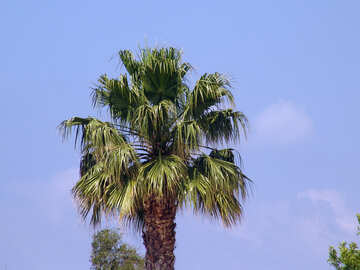 Palm №8893