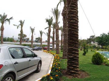Parken  Auto   Palmen №8536