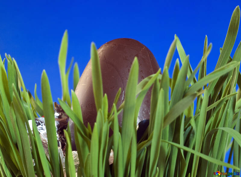 Egg  of the  Chocolate  at  Blue  background №8123