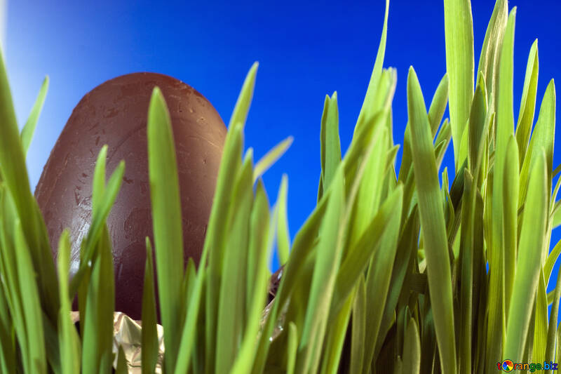 Chocolate  Egg  at  Blue  background №8125