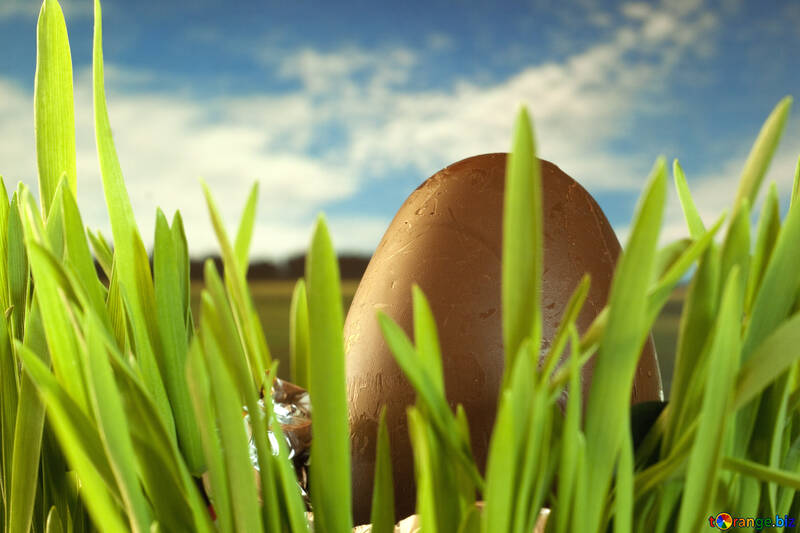 Chocolate egg , , grass №8116