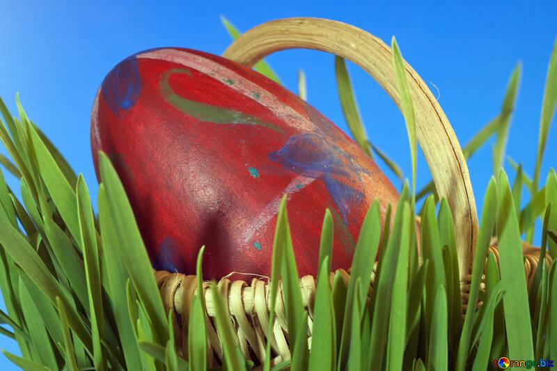 Easter egg  at  Blue  background. №8204