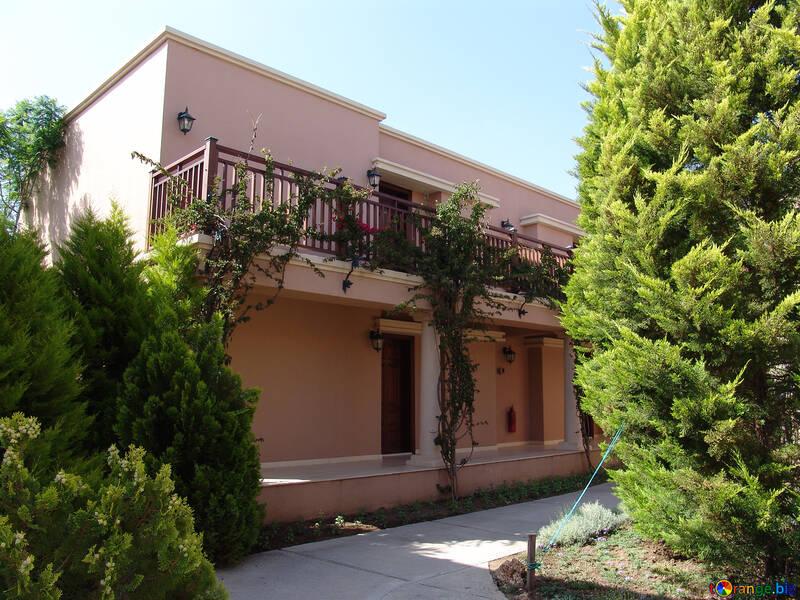 Cypresses  near  home №8563