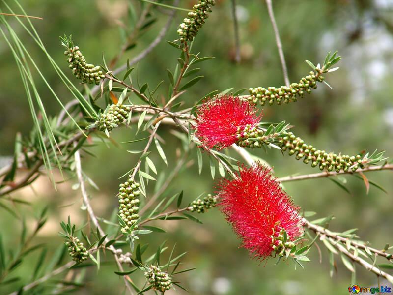 Rosso folto fiore №8445