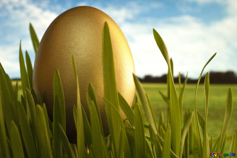Gold  Egg   grass №8132