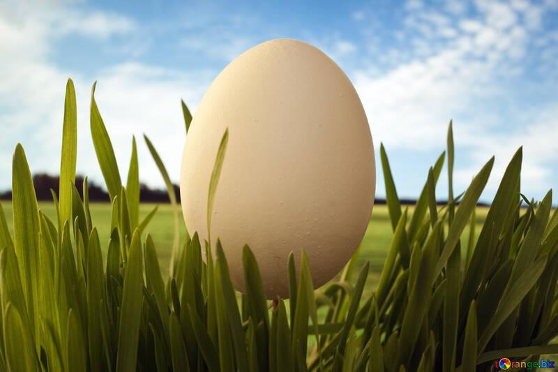 Egg - character  life. №8121
