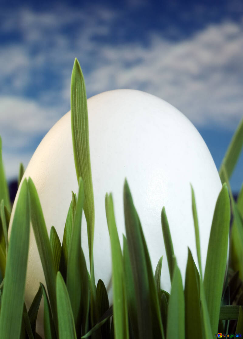 Egg  Spring   grass. №8159