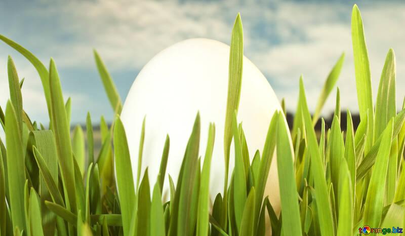 Symbols  Easter Egg : , Green  grass. №8158