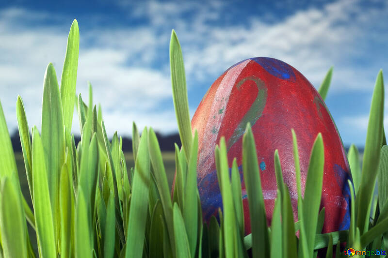 Easter  Egg  Spring   grass №8161