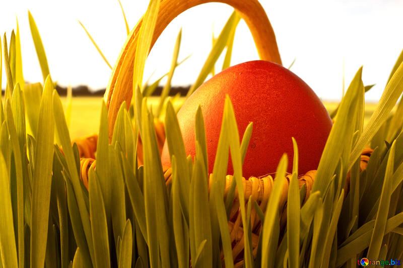 Solar Mañana Passover resurrección №8196