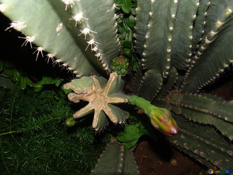 Cactus №8866