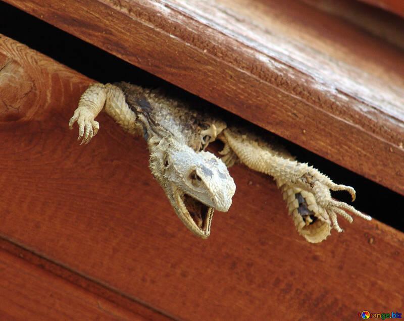 Scarecrow  Lizards №8881