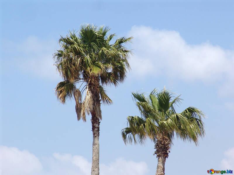 Palms №8892