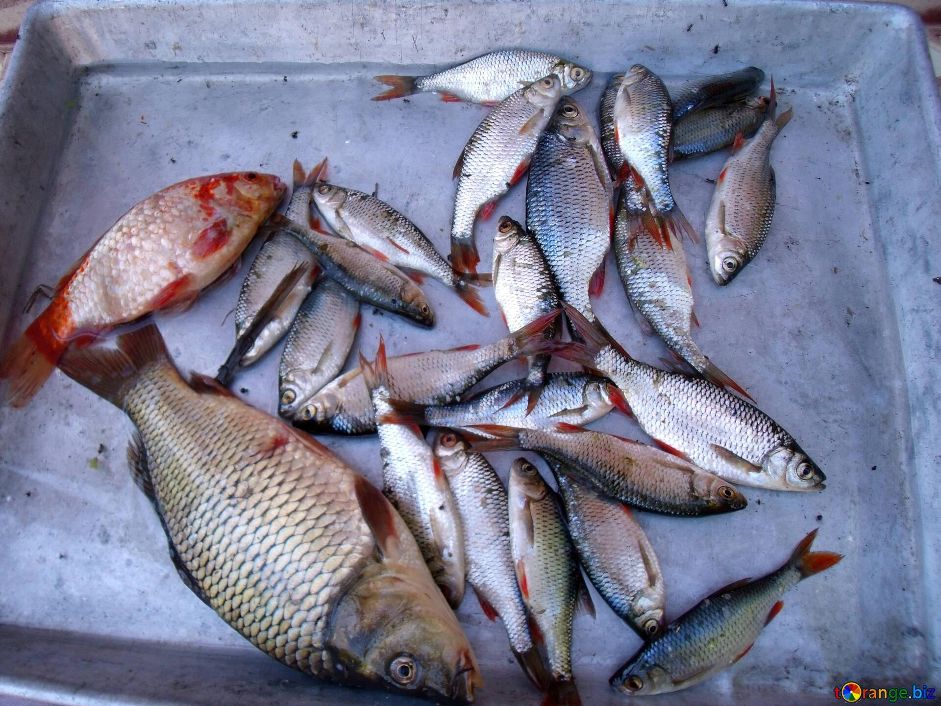Картинки как улов рыбы