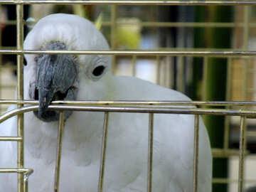 Beak  parrot №9474
