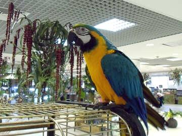 Parrot  Ara №9480