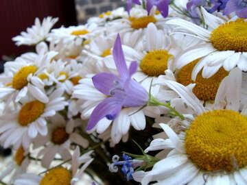 Bouquet  daisies. №9754