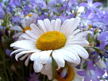 Daisies bouquet. №9765