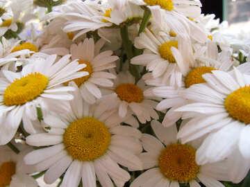 Bouquet  daisies №9797