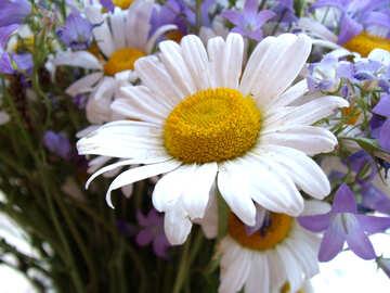 Daisy    bouquet №9781