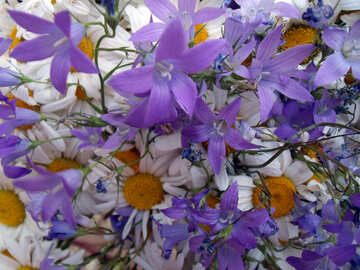 The Village  bouquet №9780