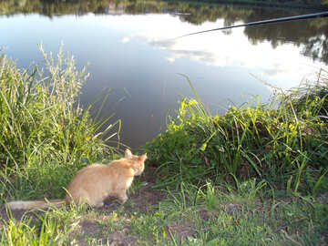 Cat  Fishing   №9488