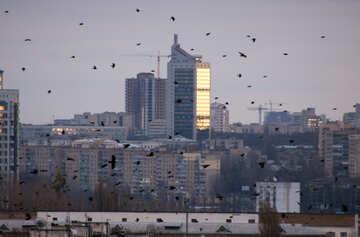 Ravens  en  Ciudad №9021