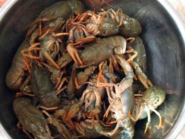 Crayfish   №9961