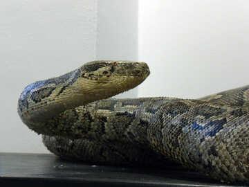 Scarecrow  snakes №9482