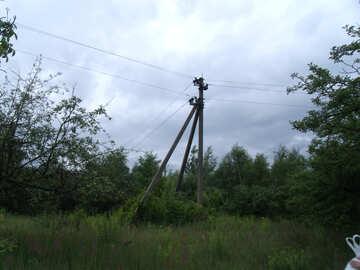 Pillar  in  Forest №9605