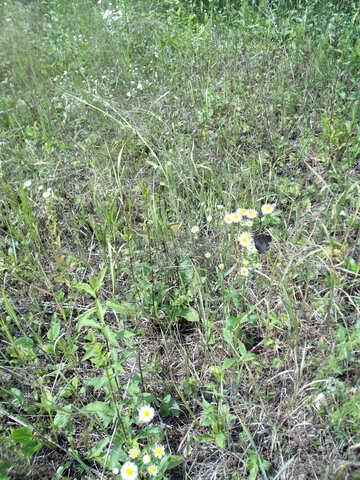 Field  flowers №9642
