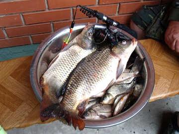 Рыбалка №9285