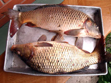 Рыбы №9272